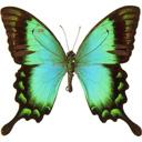 """Вышивка крестом.  Схема вышивки  """"Бабочка """".  130x121 крестов * 21 цветов * Теги: бабочки."""